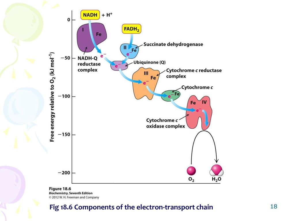 Chapter 18 oxidative phosphorylation ppt video online download 18 fig 186 components of the electron transport chain pooptronica Choice Image