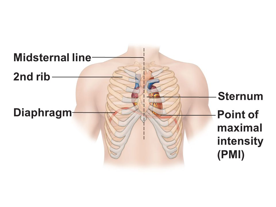 Figure 181a Location Of The Heart In The Mediastinum Ppt Video