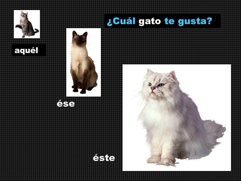 ¿Cuál gato te gusta aquél ése éste