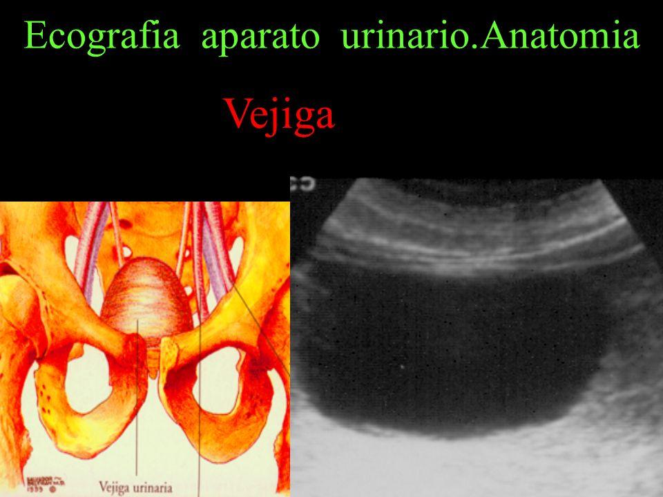 Ecografia aparato urinario.Anatomia