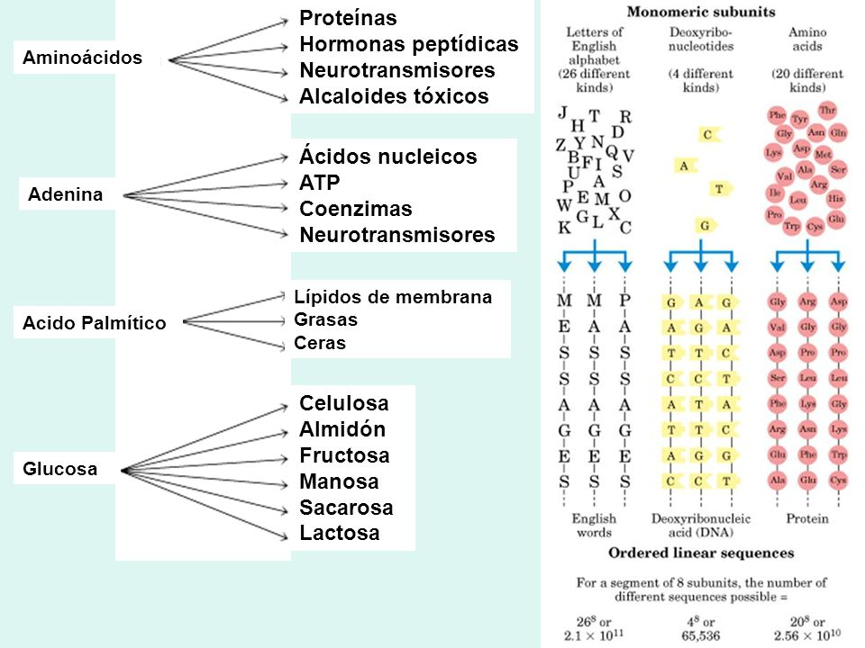 Proteínas Hormonas peptídicas Neurotransmisores Alcaloides tóxicos