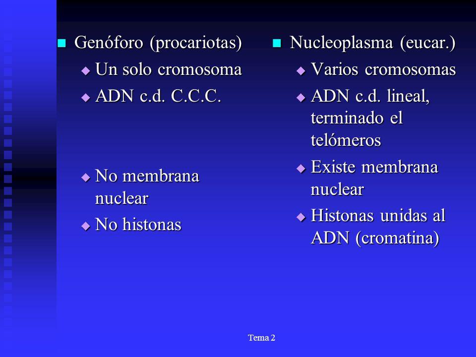 Genóforo (procariotas) Un solo cromosoma ADN c.d. C.C.C.