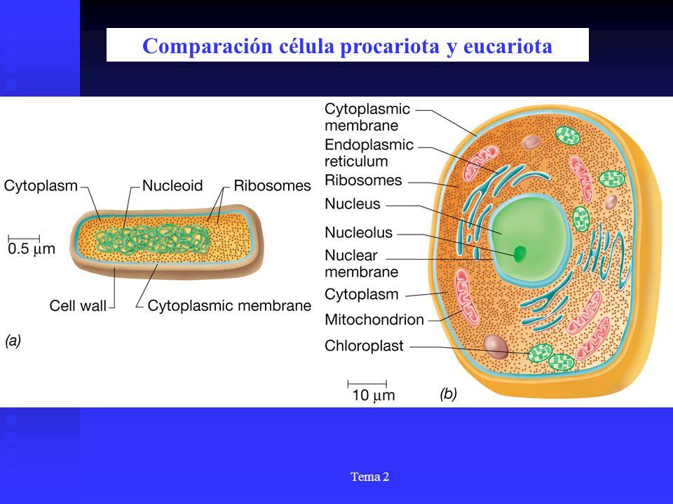 Comparación célula procariota y eucariota
