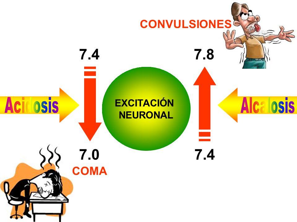 EXCITACIÓN NEURONAL 7.0 7.4 7.8 Acidosis Alcalosis COMA CONVULSIONES