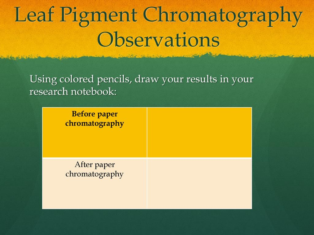 lab report on chromatography