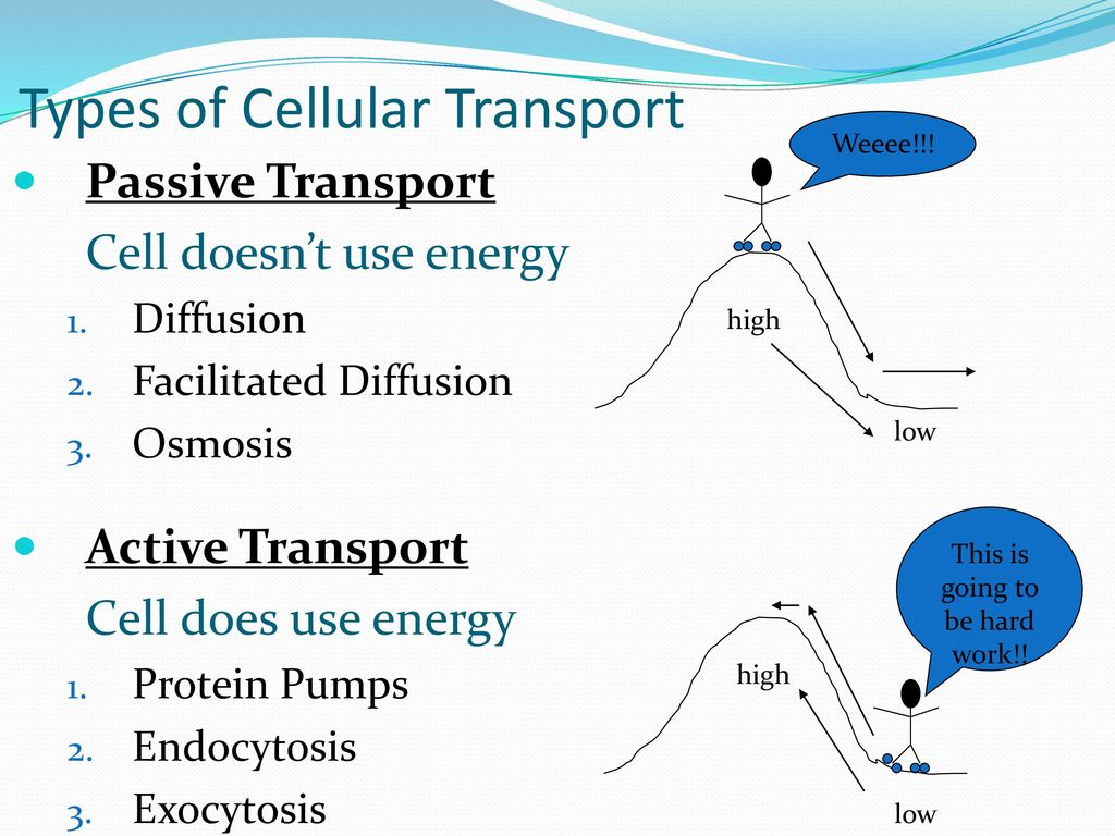 Chapter 71 life is cellular ppt video online download 53 types of cellular transport pooptronica Choice Image