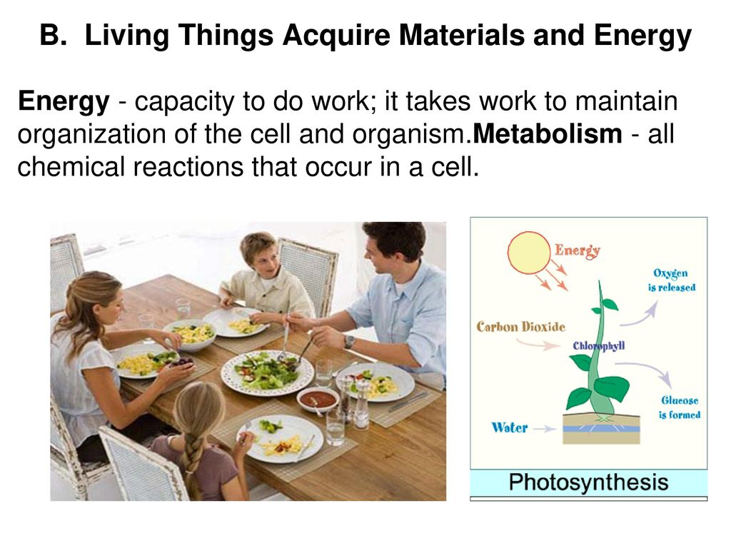 4 things cells do to maintain homeostasis - C Living Things Maintain Homeostasis