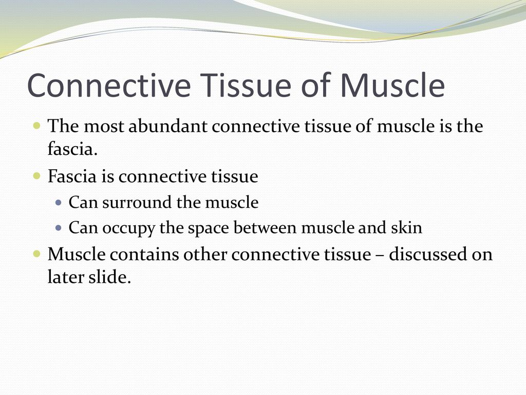 where is connective tissue found Learn more from webmd about connective tissue disease, including symptoms and causes of various forms.