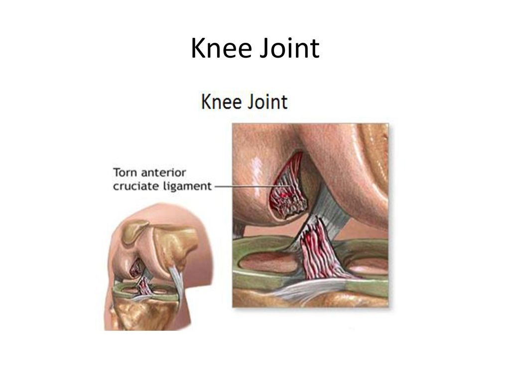 Anatomy Of Knee Joint Ppt Gallery - human body anatomy