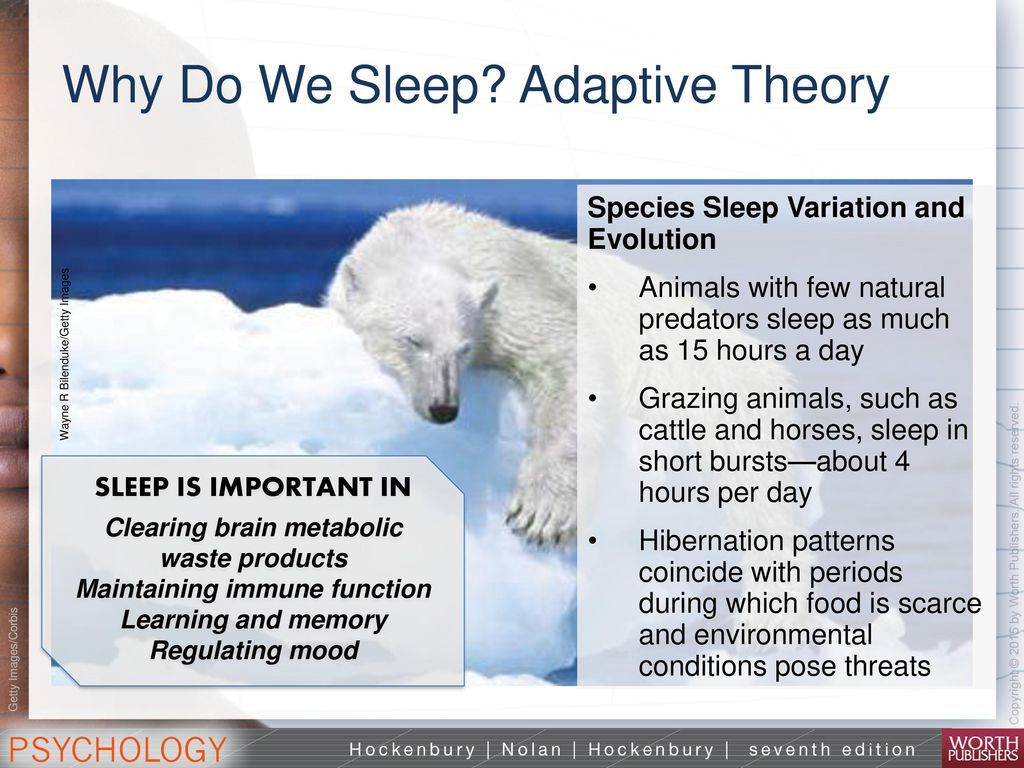 adaptive theory and the restorative theory of sleep Recovery/restoration theory of sleep  animals and due to this it is more logical to argue that sleep has more of an adaptive function rather than restorative .