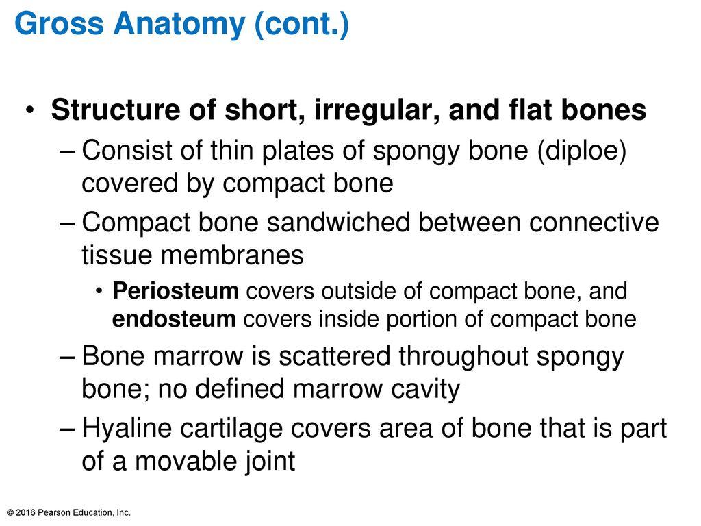 Usmle road map gross anatomy
