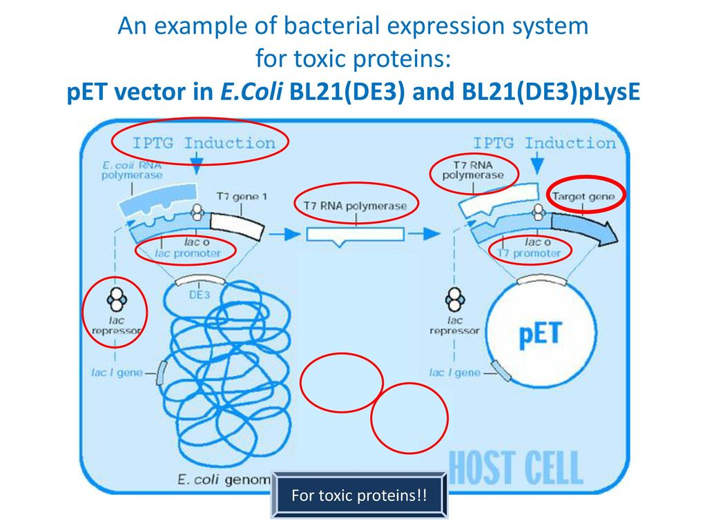 eukaryotic vectors for expression of proteins A new method to customize protein expression vectors for fast, efficient and background free parallel cloning  eukaryotic hosts were used if suggested by the.