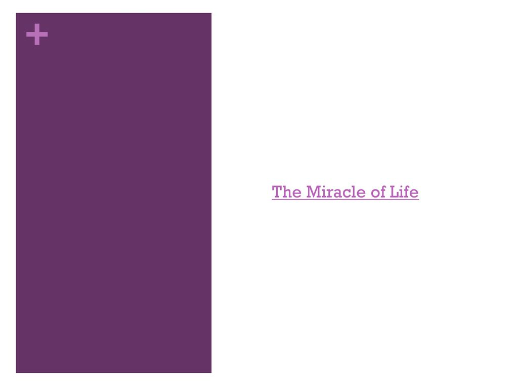 conception the miracle of life This spectacular video showing human conception and the growth and development of a the miracle of conception – a spectacular video seeing the miracle of.