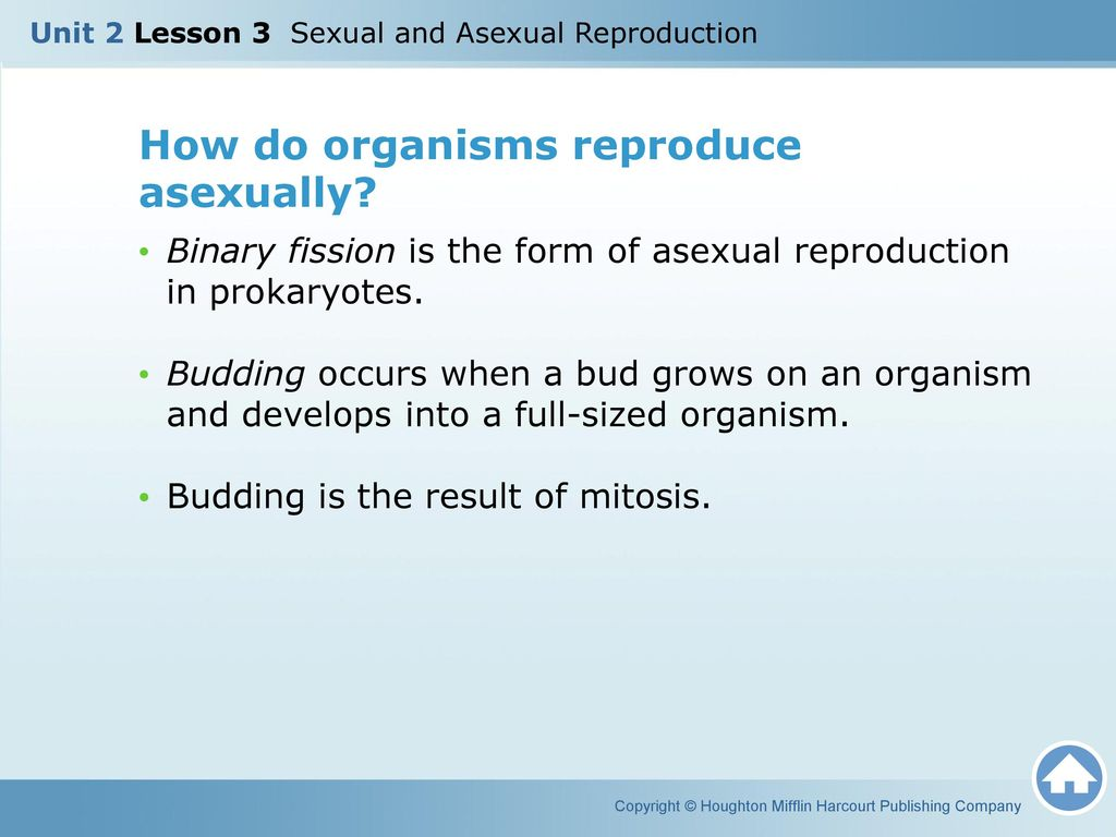 Unit 2 Lesson 3 Sexual and Asexual Reproduction - ppt download