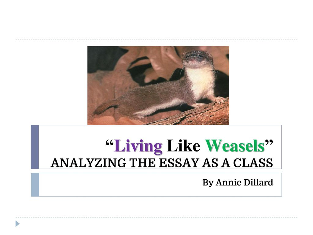 annie dillard living like weasels Living like weasels by annie dillard tells the story of her personal encounter with a weasel and how that opened her eyes to what the wild can teach us.