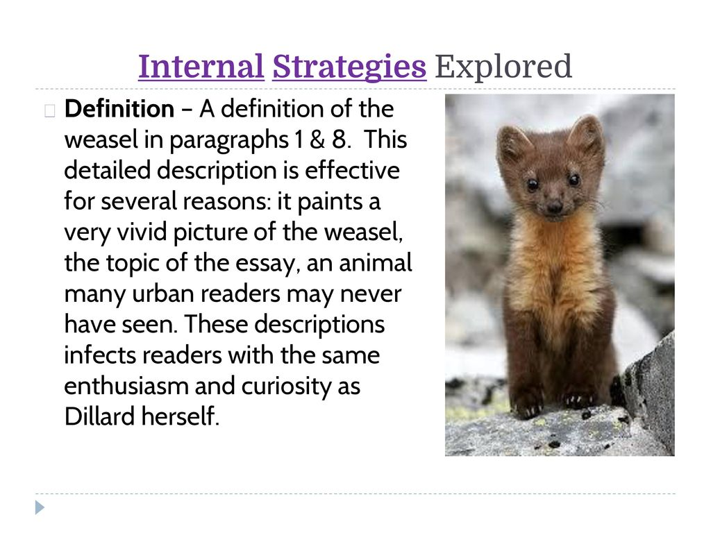 "living like weasels"" analyzing the essay as a class ppt video  8 internal strategies explored"