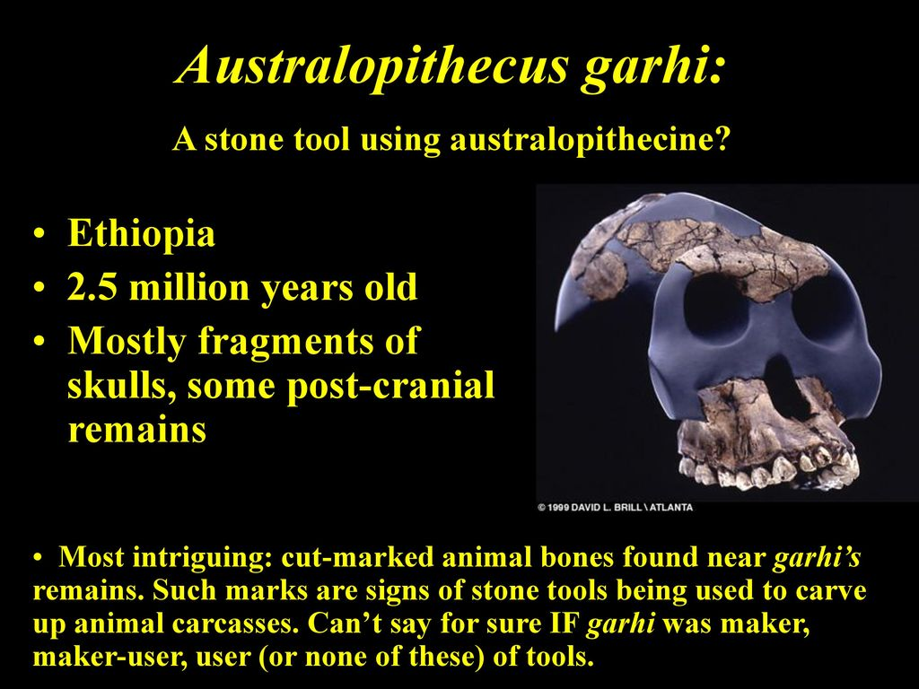 Australopithecus Garhi Tools