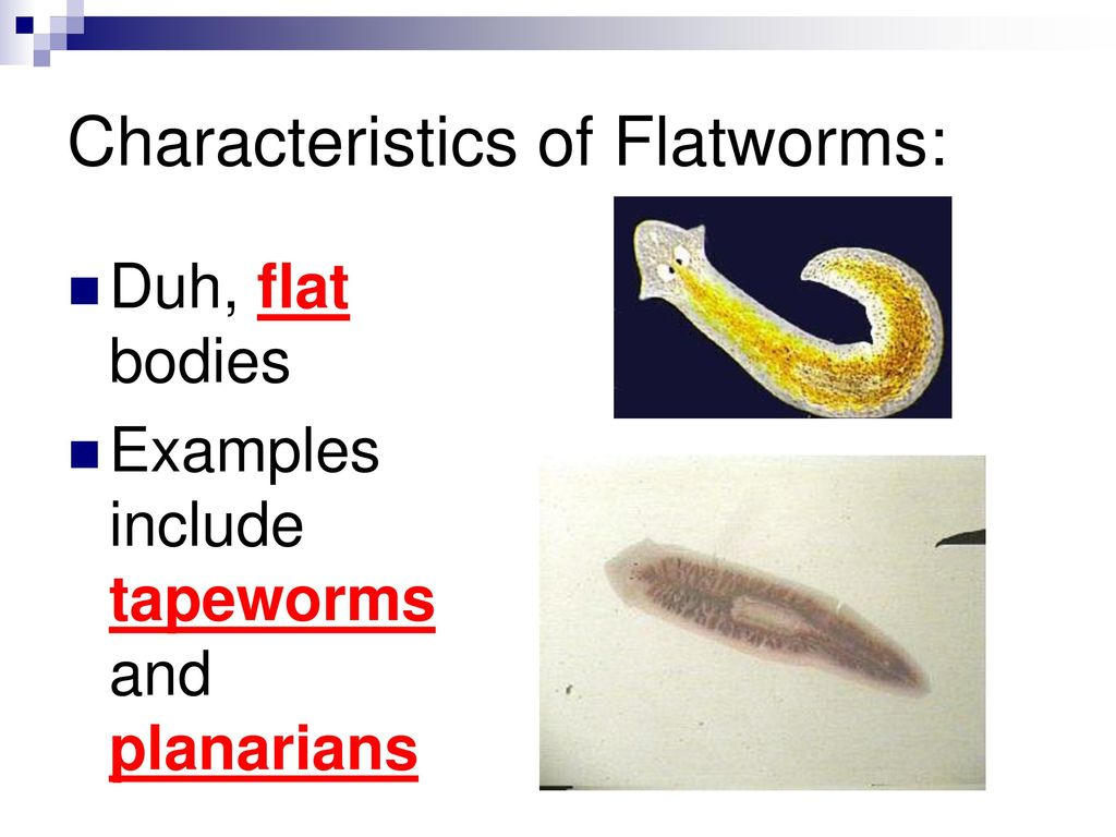 Flatworms coloring worksheet answers anatomy muscle coloring worm notes chapter 9 section ppt video online download anatomy muscle coloring worksheet planaria coloring worksheet pooptronica