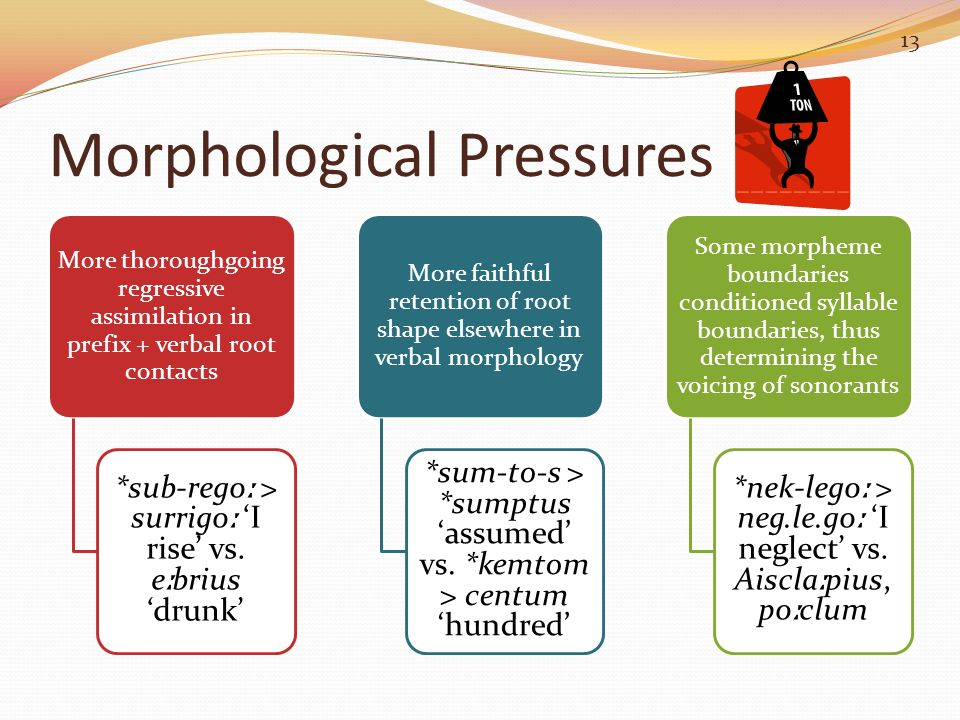 Morphological Pressures