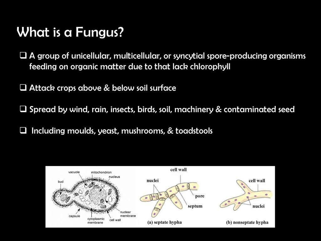 Fungus Fungicides Classification Activity Sudarshan Patel