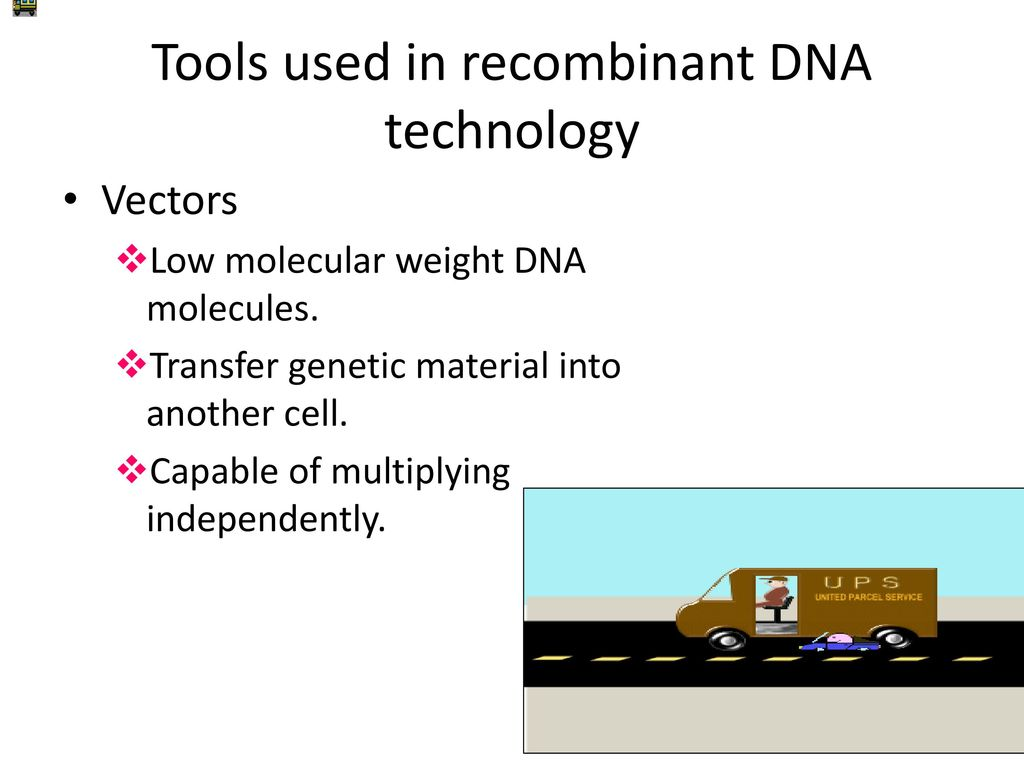 how dna technology are used in Applications and issues of the human genome project known as recombinant dna technology, dna fragments isolated from restriction enzymes are united with a vector and then reproduced along with the vector's cell dna vectors normally used are viruses.