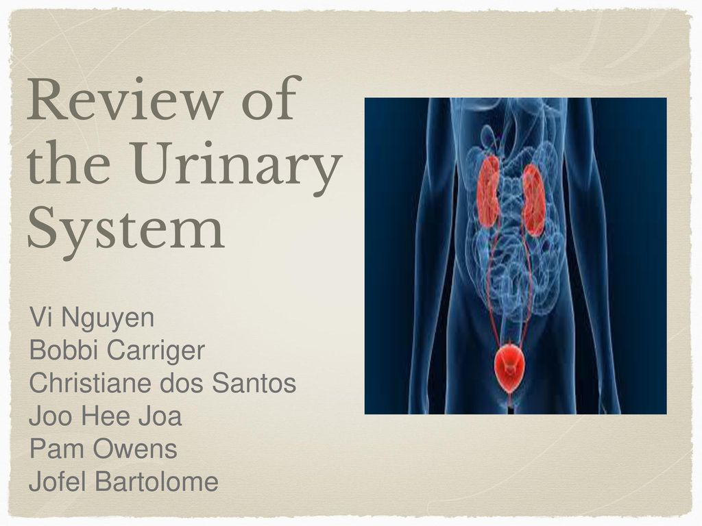 Review of the Urinary System - ppt video online download