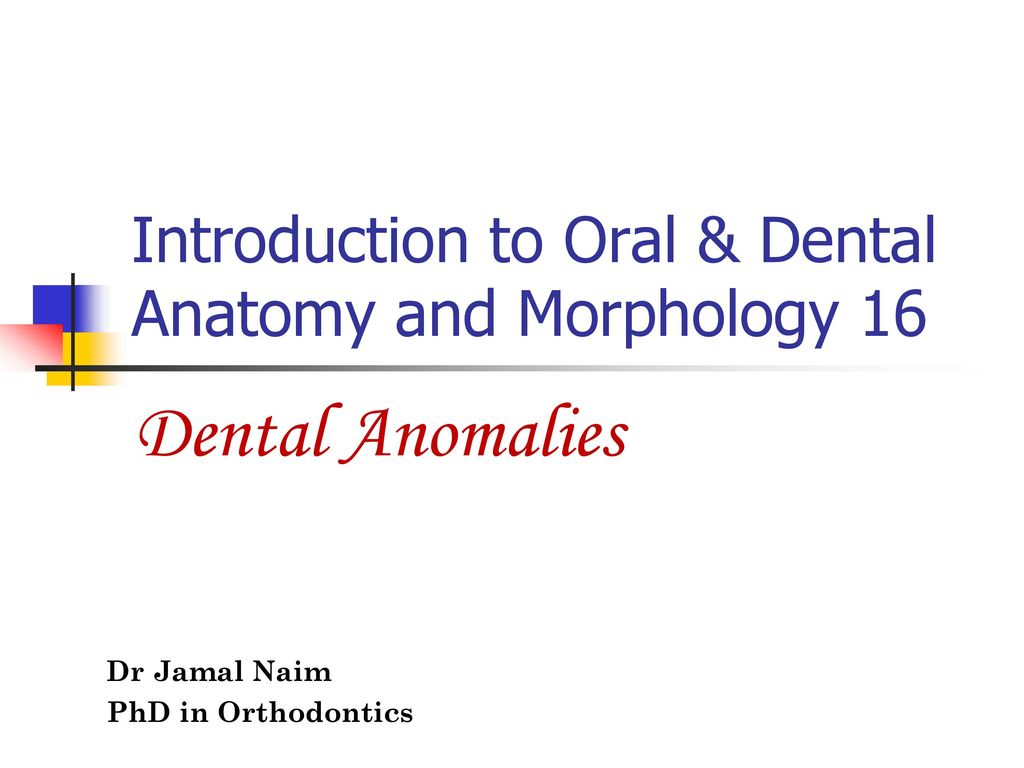 Introduction To Oral Dental Anatomy And Morphology Ppt Video