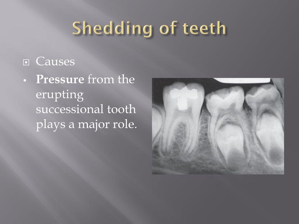 eruption and shedding of teeth pdf