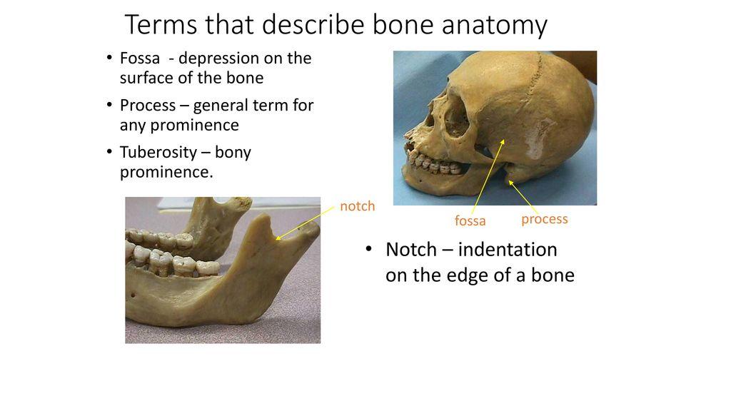 Ausgezeichnet Netzfänger Atlas Der Anatomie Ideen - Anatomie Ideen ...