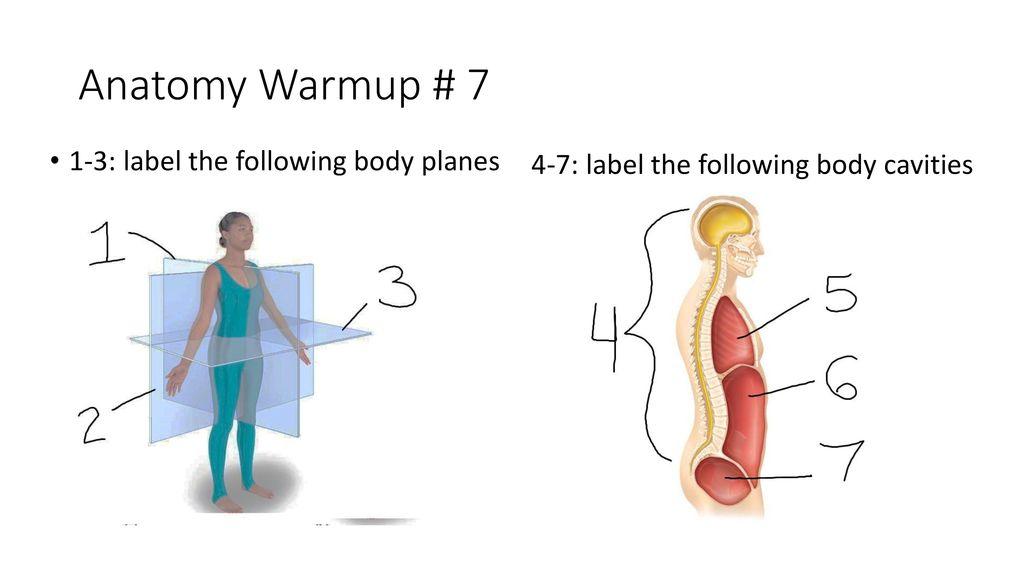 Modern Human Body Cavities Diagram Images - Human Anatomy Images ...