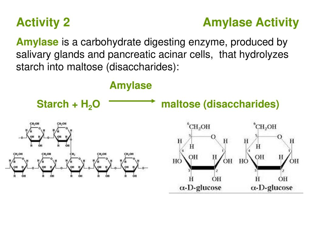 salivary amylase and starch Human salivary alpha amylase (hsamy) is an important enzyme found in the oral   further breakdown of the starch is completed by pancreatic amylase later in.