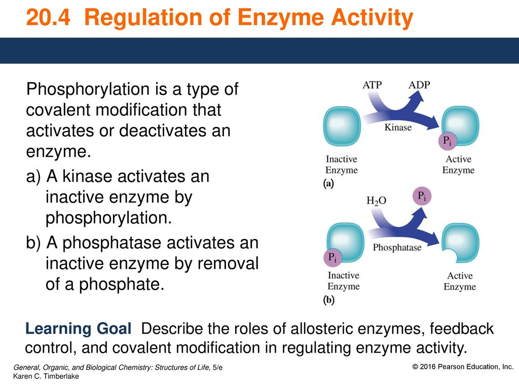 does phosphorylation activate or deactivate