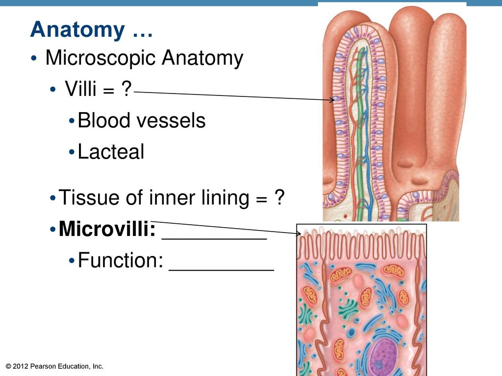 Microscopic anatomy definition 815704 - follow4more.info