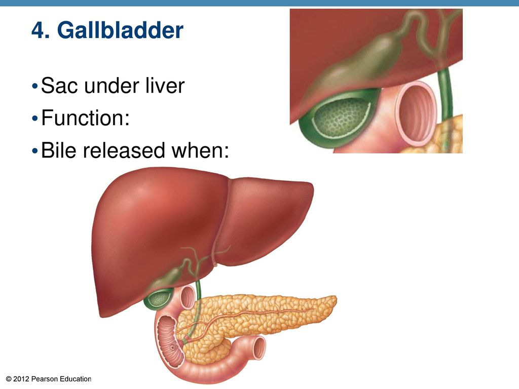 Functions of the liver | Term paper Service rdassignmentvjjz ...