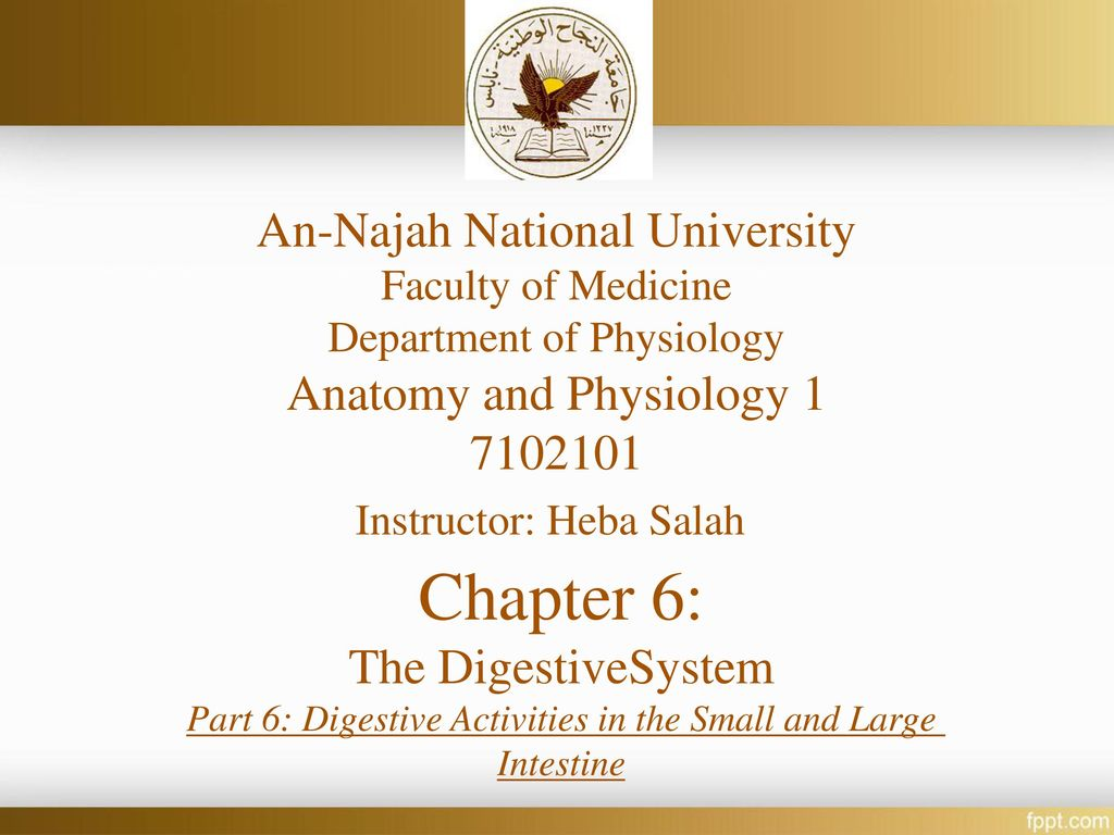 Chapter 6: An-Najah National University Anatomy and Physiology 1 ...