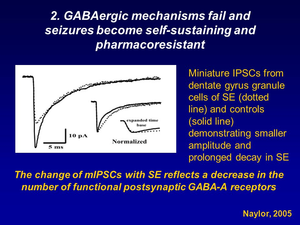 2. GABAergic mechanisms fail and seizures become self-sustaining and pharmacoresistant
