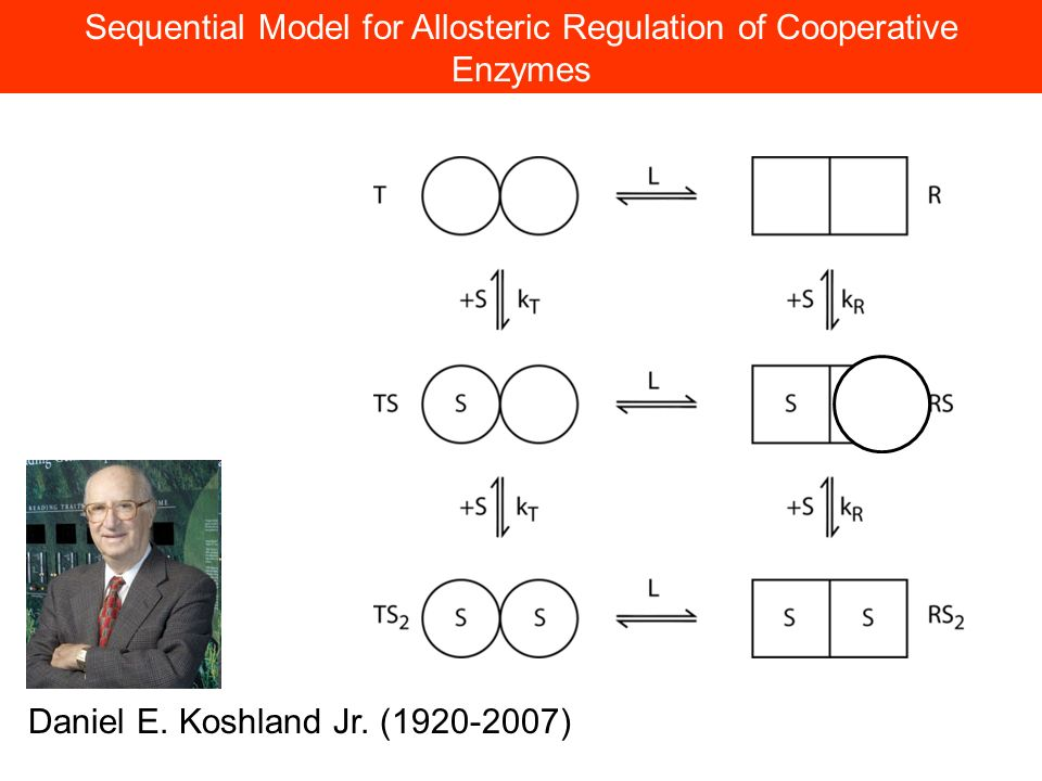 Sequential Model for Allosteric Regulation of Cooperative Enzymes