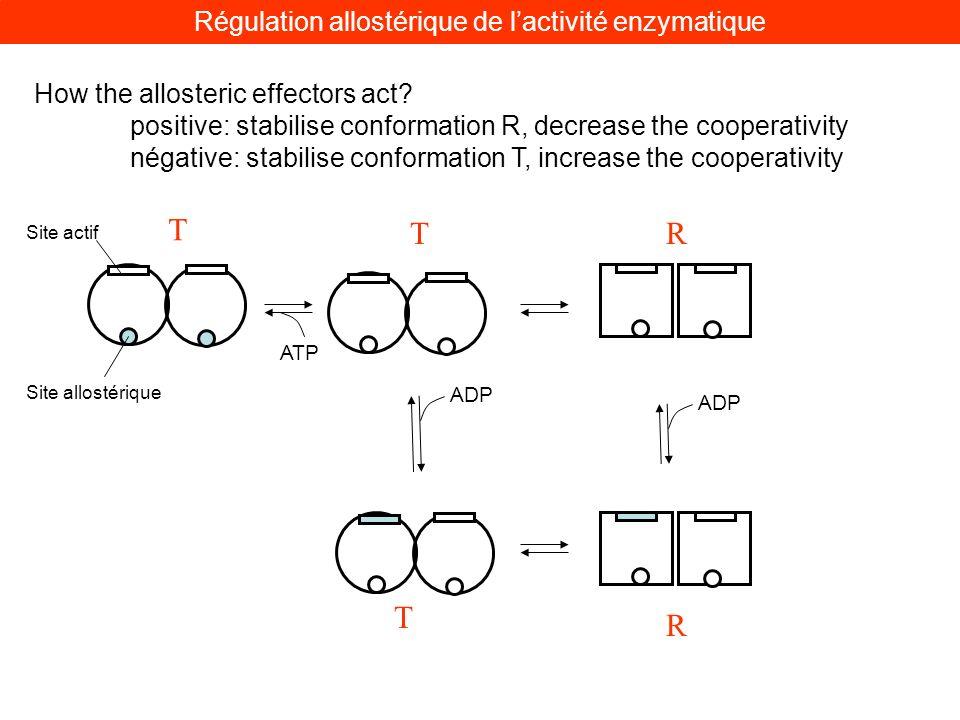 Régulation allostérique de l'activité enzymatique