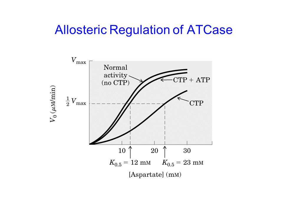 Allosteric Regulation of ATCase