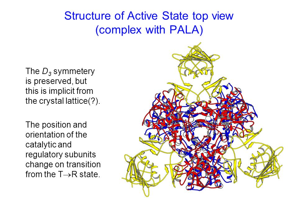 Structure of Active State top view (complex with PALA)