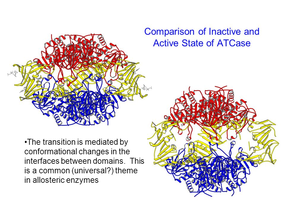 Comparison of Inactive and Active State of ATCase