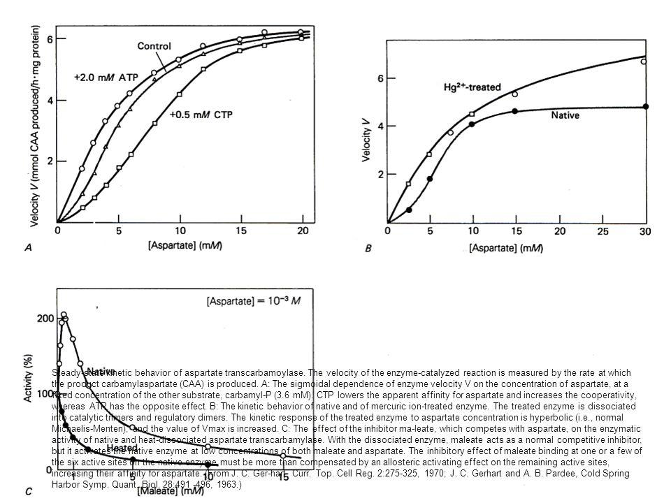 Steady-state kinetic behavior of aspartate transcarbamoylase
