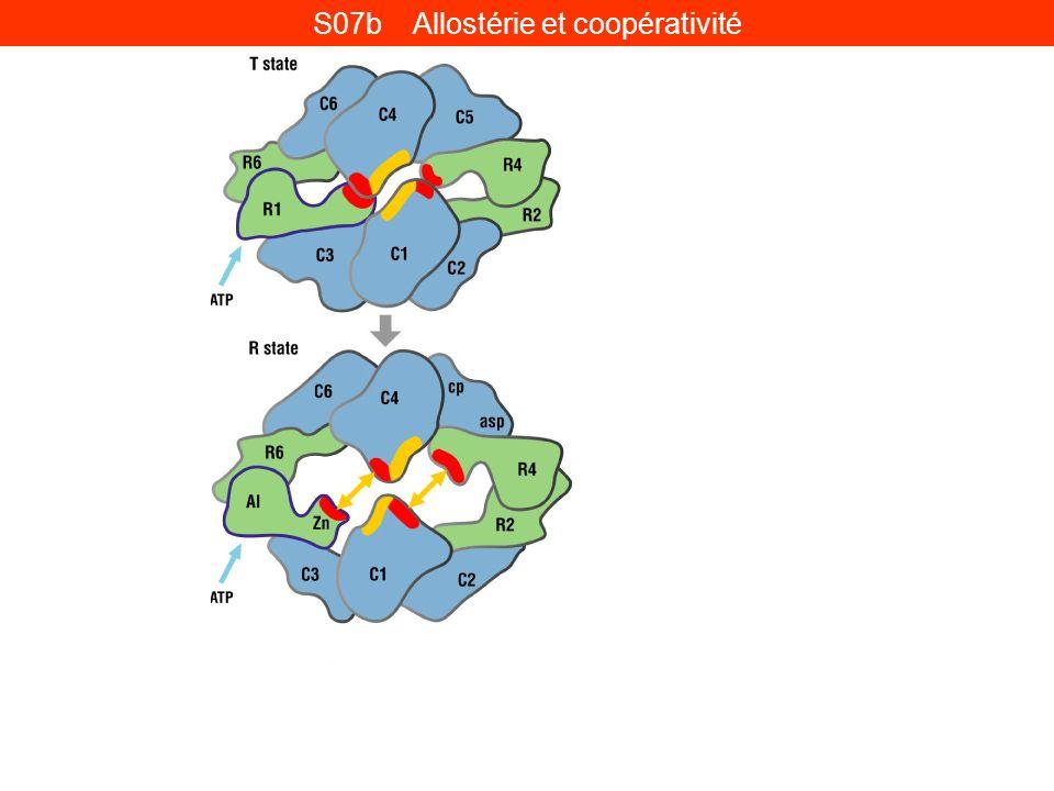 S07b Allostérie et coopérativité