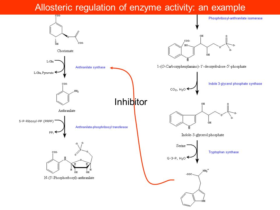 Allosteric regulation of enzyme activity: an example