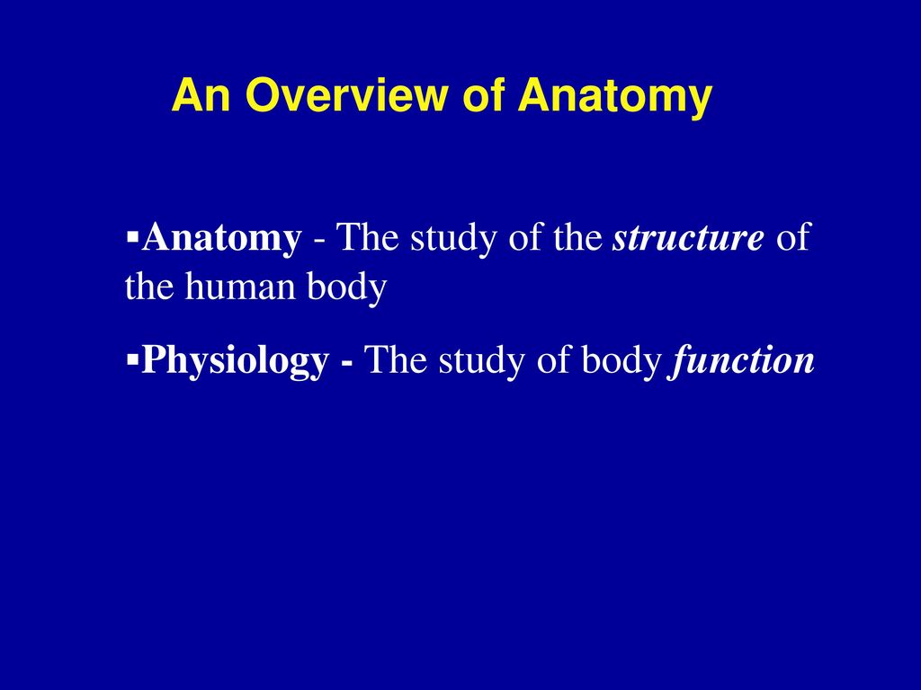 anatomy introduction slides Find predesigned self introduction slide about me powerpoint guide powerpoint templates slides, graphics, and image designs provided by slideteam.