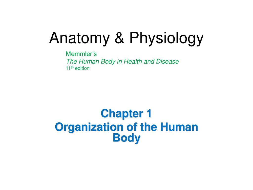 Fantastisch Anatomy And Physiology Chapter 1 Organization Of The ...