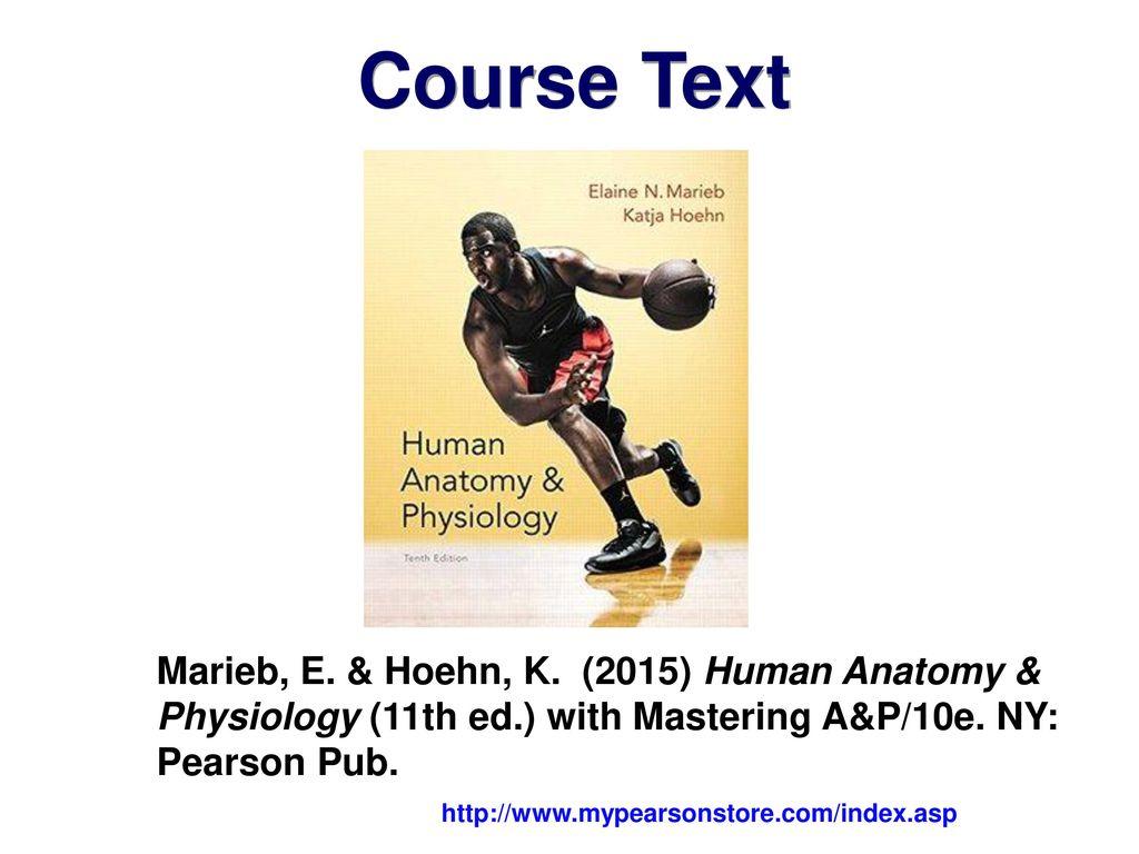 Pearson human anatomy