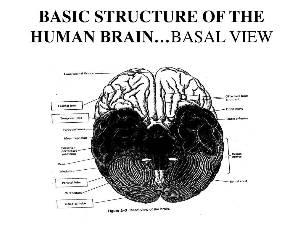 contemporary human behavioral pharmacology