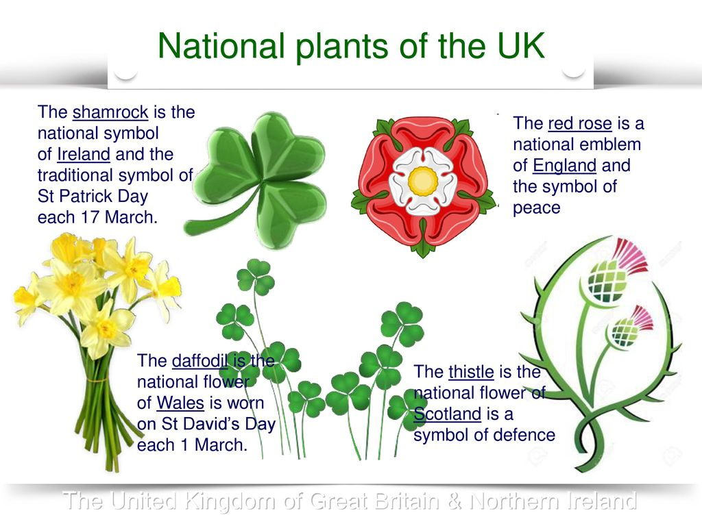 The formation of the united kingdom of great britain northern national plants of the uk buycottarizona