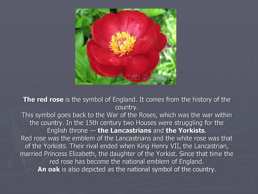 The red rose is the symbol of england ppt video online download the red rose is the symbol of england buycottarizona